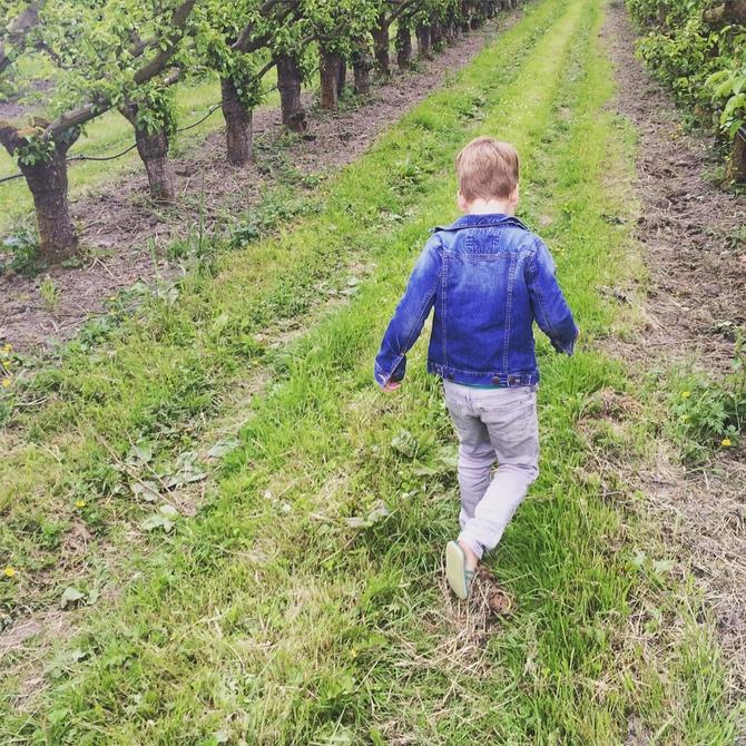 olmenhorst appelgaarde